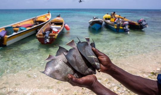 Studie: Hohes Risiko für Fischerei durch den Klimawandel